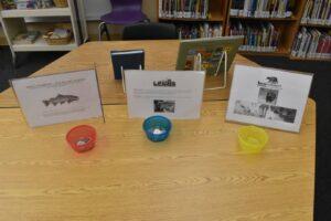 Sunnyside Library wildlife program