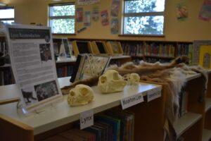 Sunnyside Library Lynx display